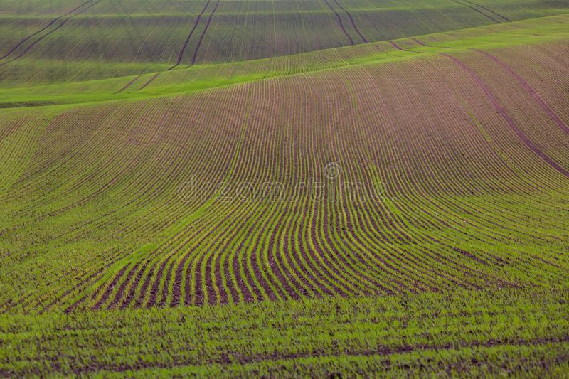 Field passes pattern. Green and brown lines stock images