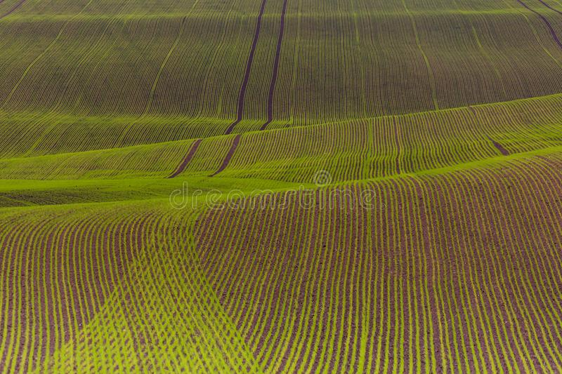 Field passes pattern. Green and brown lines royalty free stock photo