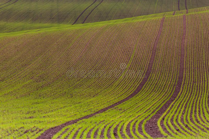 Field passes pattern. Green and brown lines royalty free stock photography