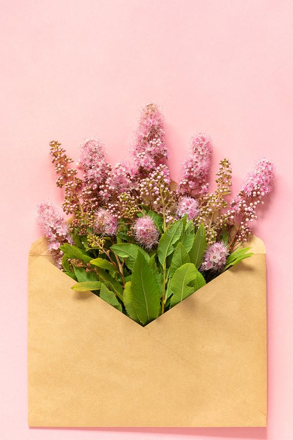 Field pink flowers in craft envelope on pink background Greeting card Flat Lay Copy space Concept Hello spring stock photos