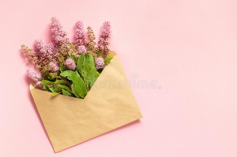 Field pink flowers in craft envelope on pink background Greeting card Flat Lay Copy space Concept Hello spring royalty free stock photography