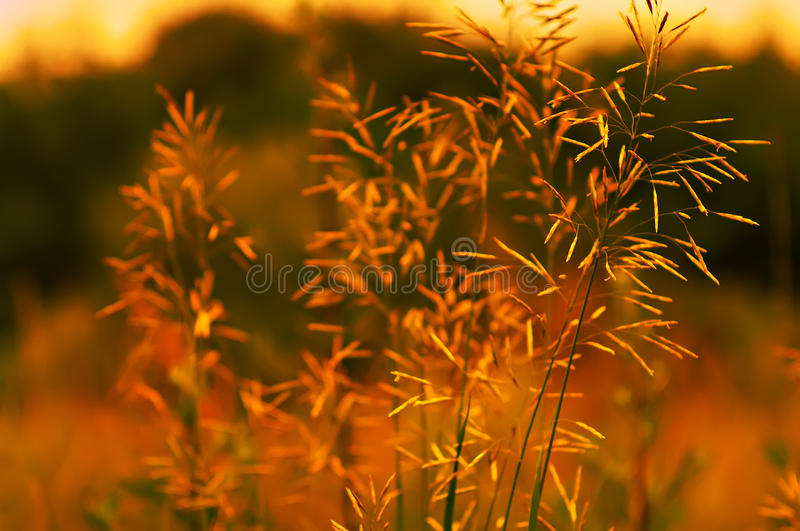 Download Field plant lit by the sun stock photo. Image of background - 14858456