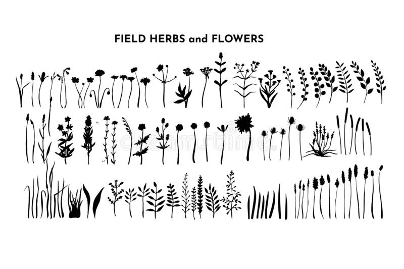 Field plants bundle. Meadow flowers set. Grass and weed collection. Branches and twig. Botanical drawing. Vector hand. Drawn silhouettes isolated on white vector illustration