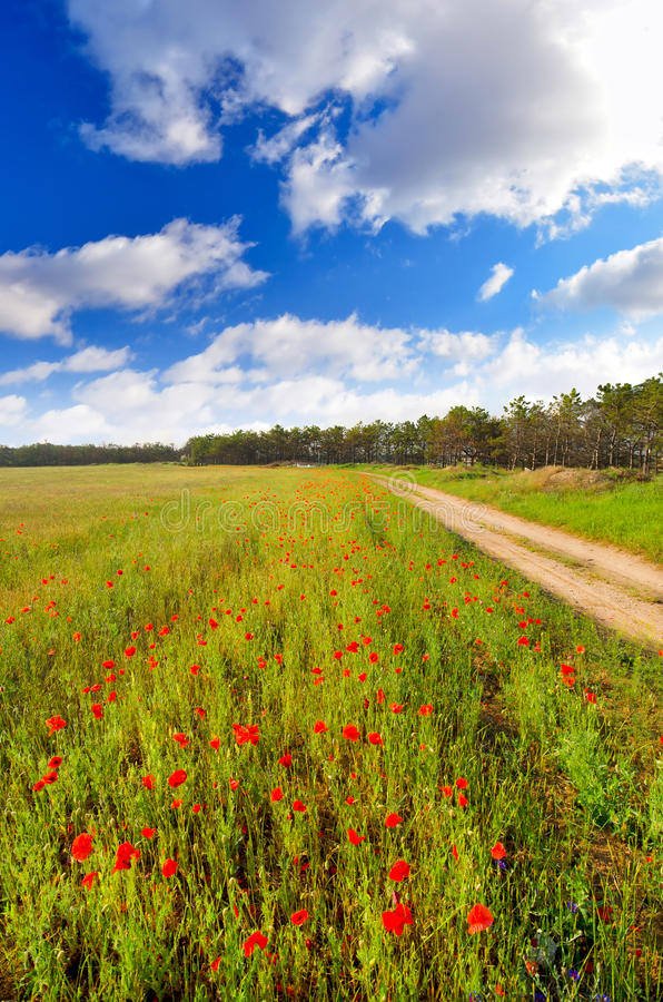 Download Field with poppies stock image. Image of summer, sunrise - 24932615