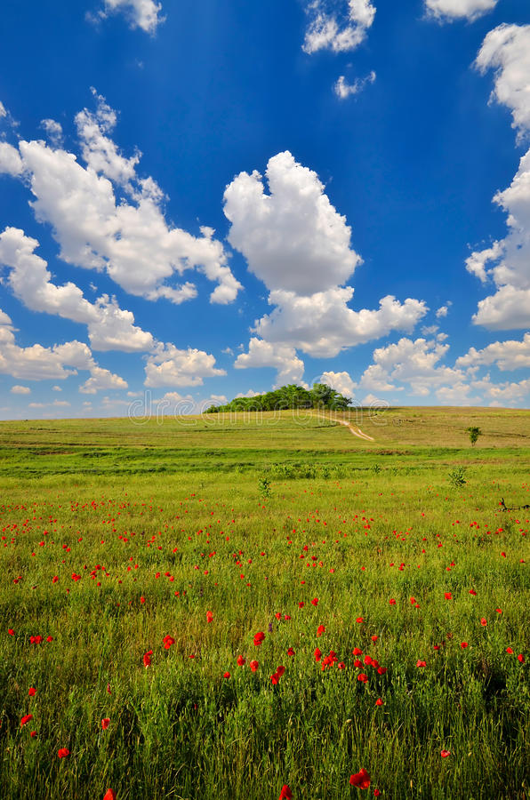 Download Field with poppies stock photo. Image of lawn, meadow - 33535016