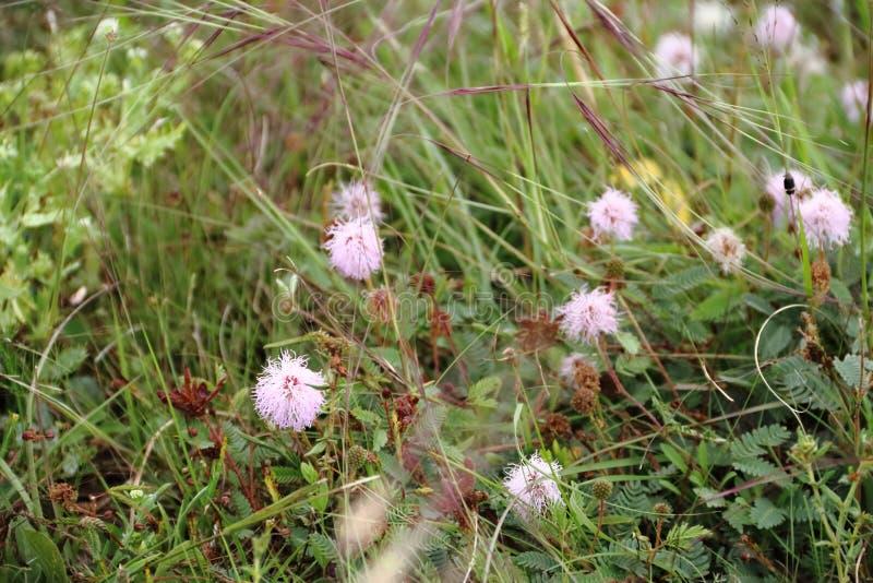 Field prairie bloomed in spring royalty free stock image