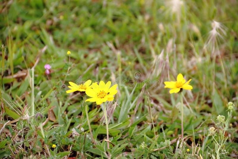Field prairie bloomed in spring royalty free stock photo