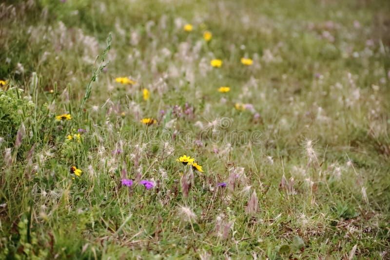 Field prairie bloomed in spring stock image