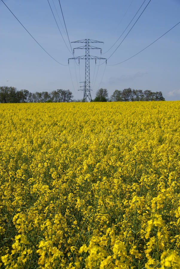 Download Field With And Electricity Mast Stock Photo - Image: 14435778