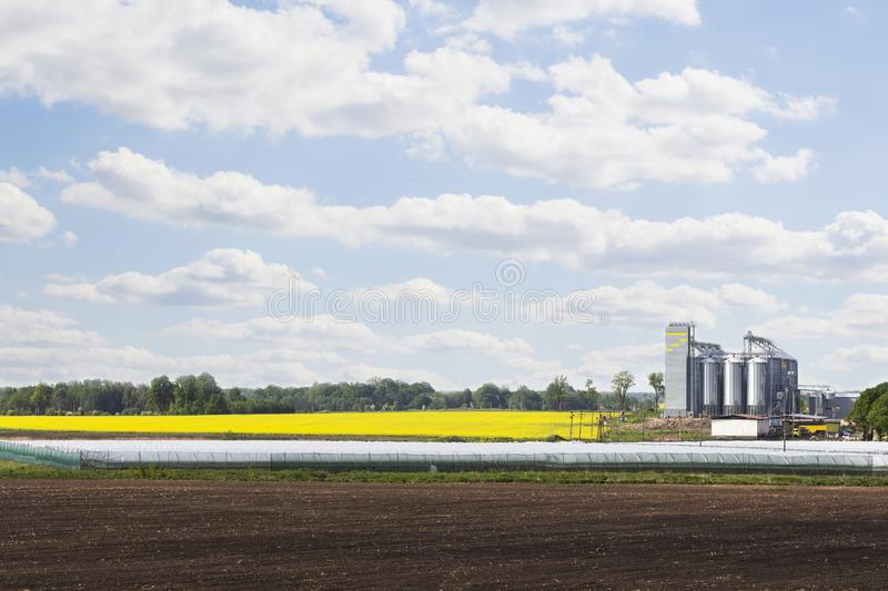 Field of rapeseed flowers, plant for cleaning and storage of agricultural products, flour, cereals and grains royalty free stock photo