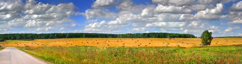 Download Field rick panoramic stock photo. Image of panoramic - 18789874