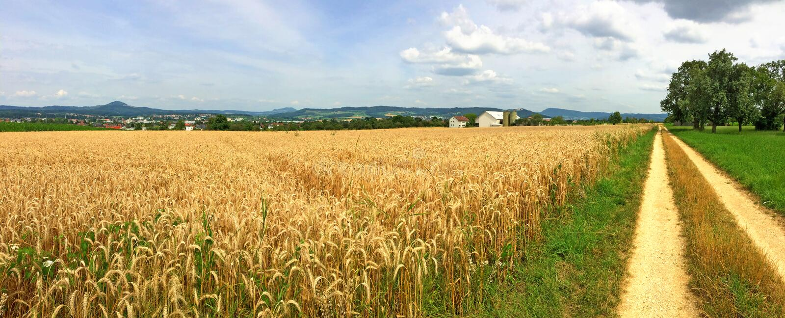 Field of ripe rye stock images