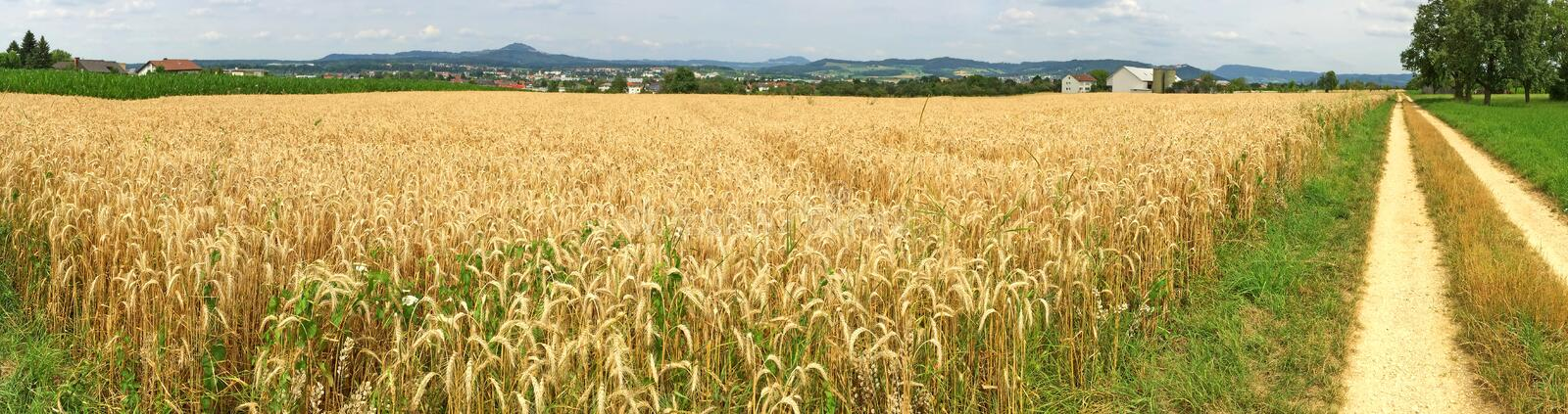 Field of ripe rye royalty free stock photo