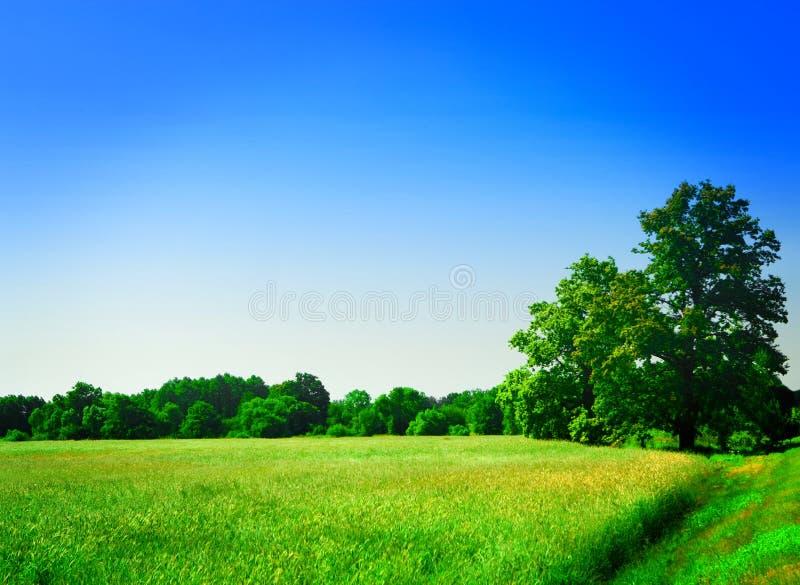 field skogen arkivfoto