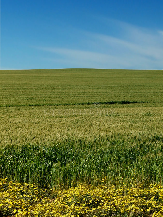 Download Field and Sky stock photo. Image of grow, scenic, color - 465668
