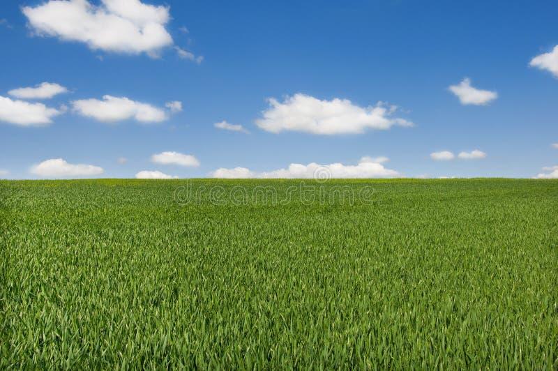 field sky стоковое фото
