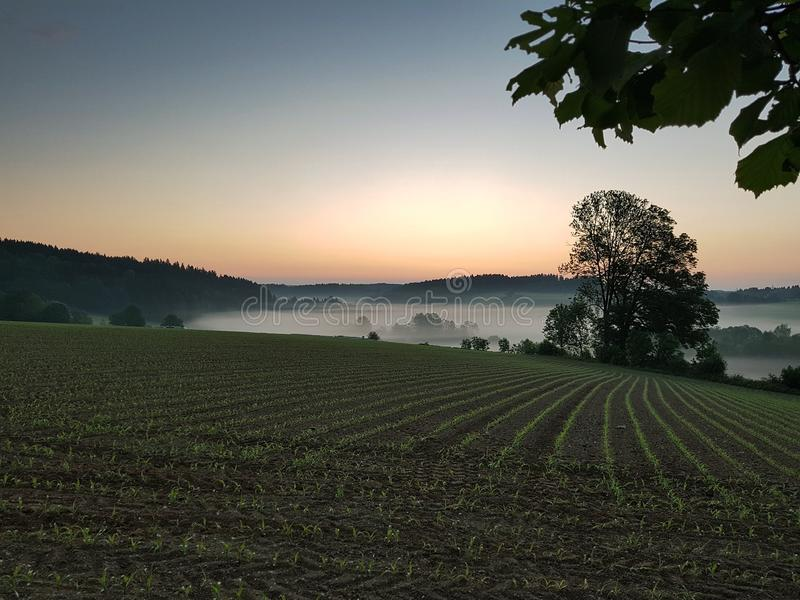 Field, Sky, Dawn, Morning royalty free stock images