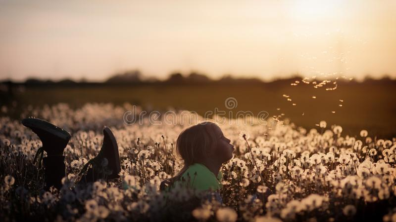 Field, Sky, Grass, Morning stock images