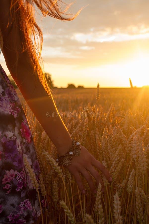 Field, Sky, Wheat, Grass Family royalty free stock photography