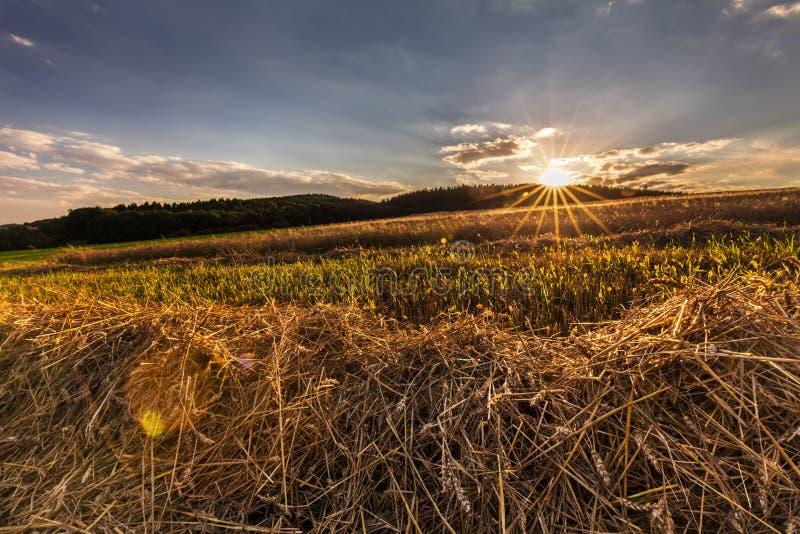 field solnedgången royaltyfri fotografi