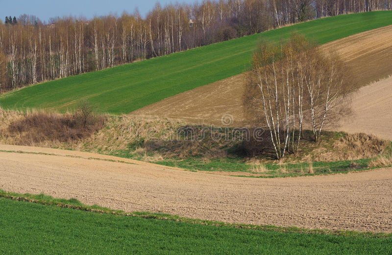 Download Field stock photo. Image of trees, spring, countryside - 39501138