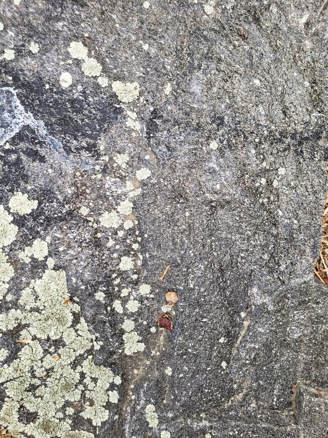 Field stone texture up close photo with moss growing on it stock images