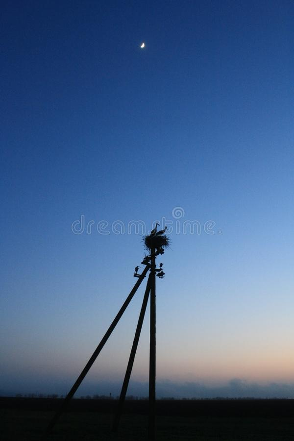 Field and storks in the nest stock photography