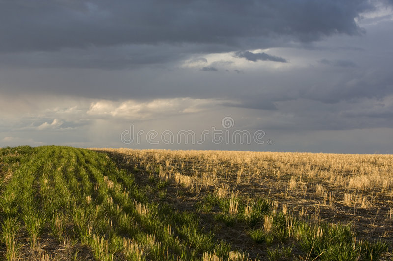 Field and a stormy sky royalty free stock photos