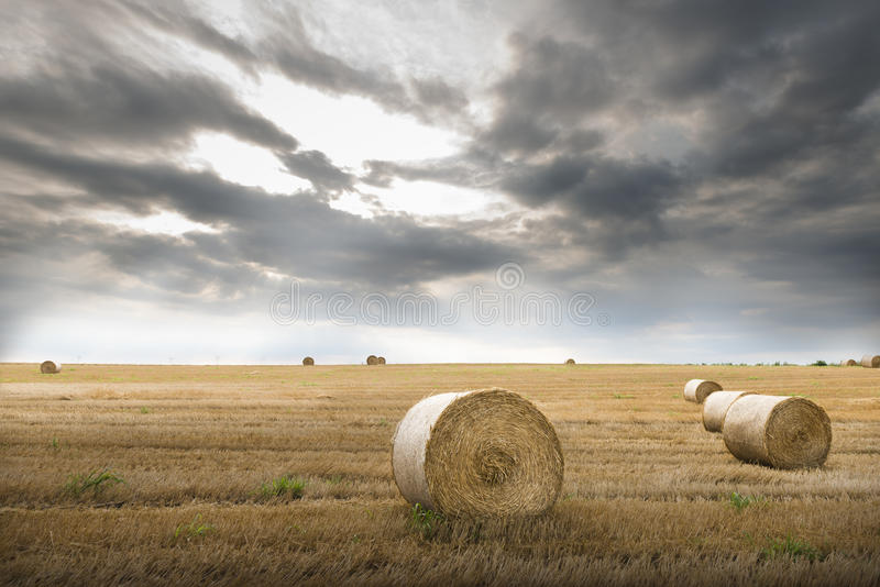 Download Field with straw bales stock photo. Image of horizon - 32438948