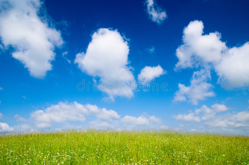 Field of summer flowers royalty free stock photography