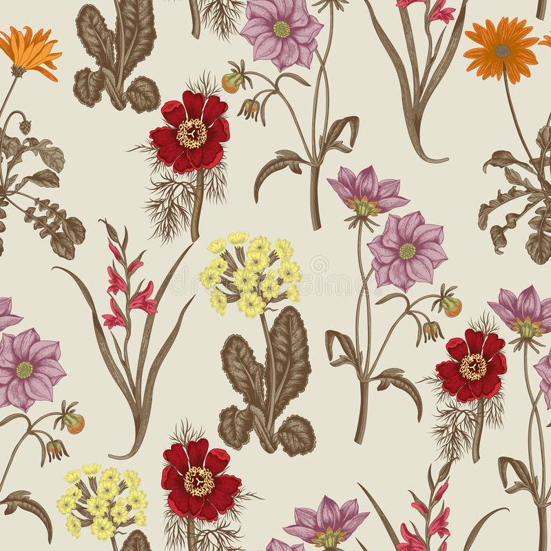 Field summer flowers. Seamless background. Botany. Cloth, wallpaper. Bloom. Texture with floral pattern. royalty free illustration