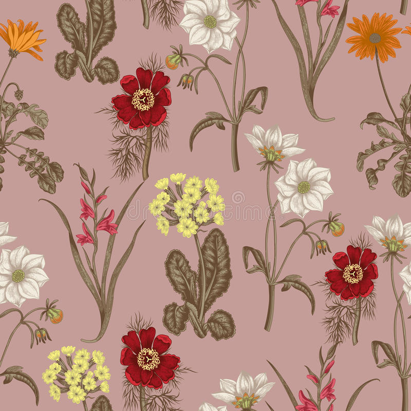 Field summer flowers. Seamless background. Botany. Cloth, wallpaper. Bloom. Texture with floral pattern. vector illustration