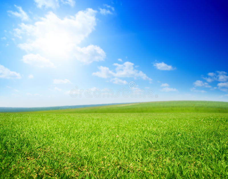 Field of summer grass royalty free stock photos