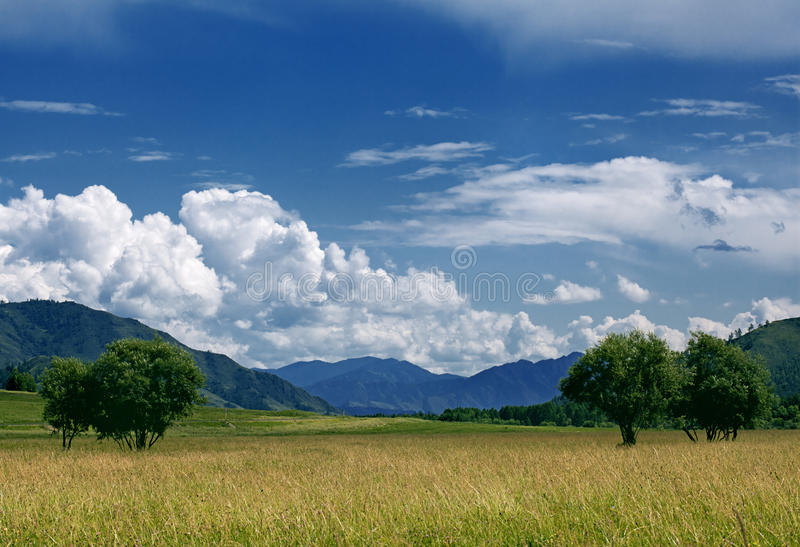 Field of summer grass. And bright blue sky royalty free stock photo