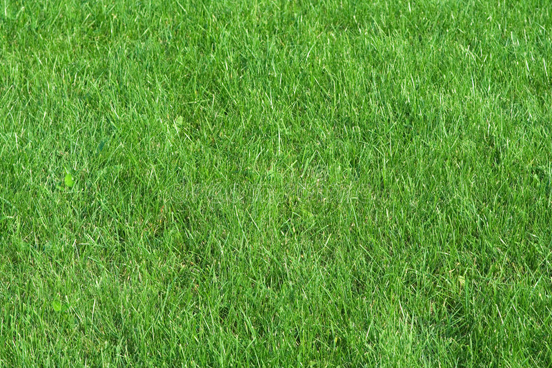 Field of summer grass. Beautifully cut field of summer grass. green spring or summer background royalty free stock photo