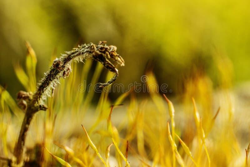 Field summer grass. Macro closeup shot stock photos