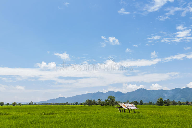 The field of summer grass and mountain. Field of summer grass and mountain royalty free stock photography