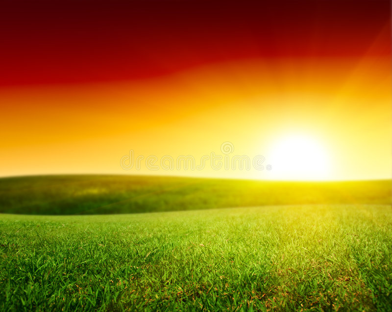 Field of summer green grass royalty free stock image