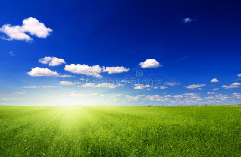 field sunen royaltyfria foton
