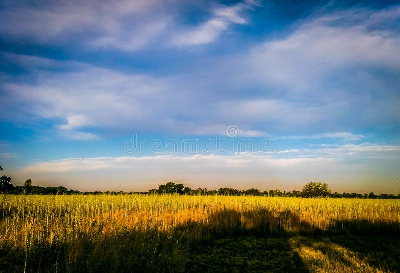 Field sunset stock image