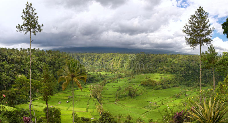 Field terraces and mount Agung, Bali. Panorama of valley with rice field terraces and view on mount Agung, Bali, Indonesia stock photography