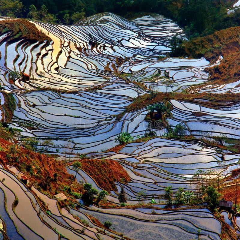 field terrasserad paddy arkivfoto