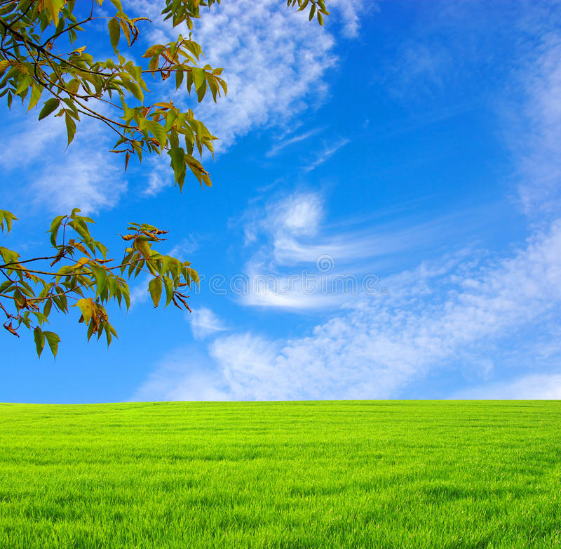 Download Field with tree stock photo. Image of flower, field, tree - 12771742