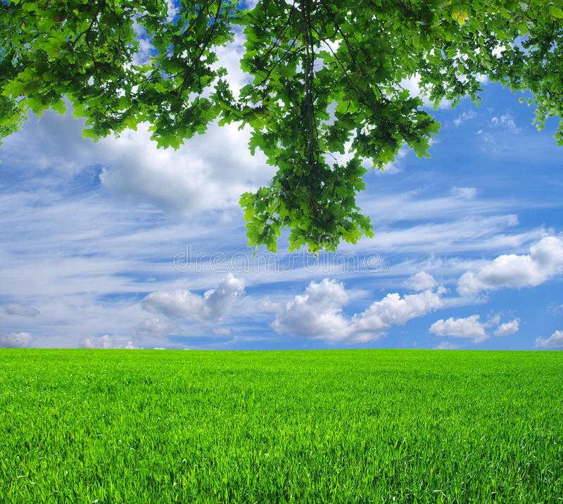 Field With Tree Royalty Free Stock Photography