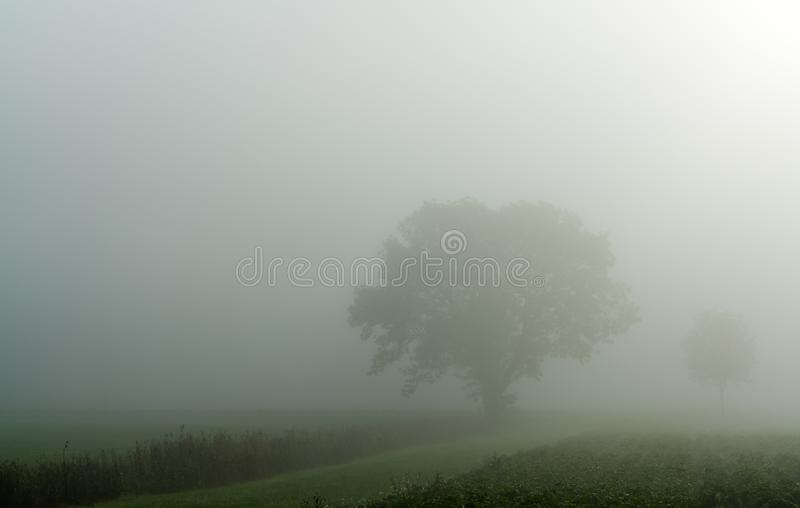 Field and tree foggy idyllic landscape in the coutnryside. Of Switzerland near Sennwald royalty free stock photography