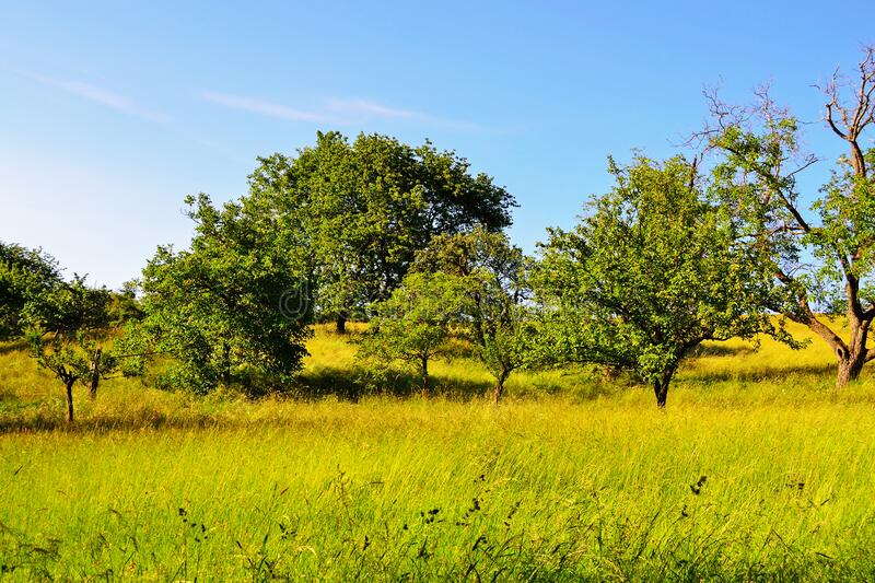 Grass Field with Trees, Slovakia royalty free stock images
