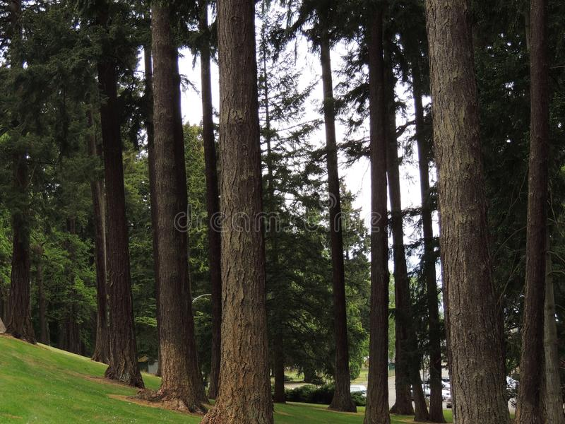 Field of trees stock image