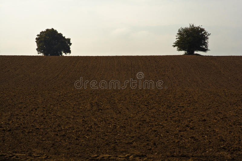 Field and trees stock images