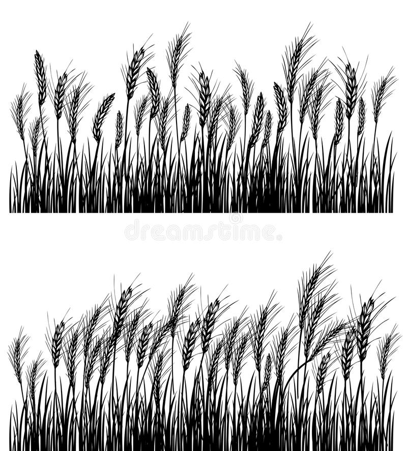 Download Field Of Wheat Royalty Free Stock Images - Image: 23982639
