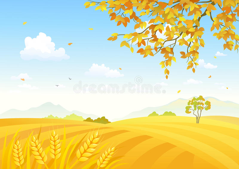 Field of wheat background vector illustration